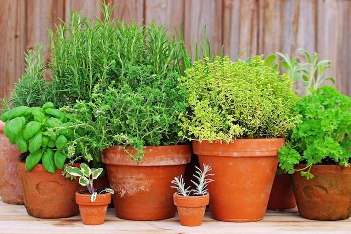 pots-of-herbs-health-coach-army-700x467